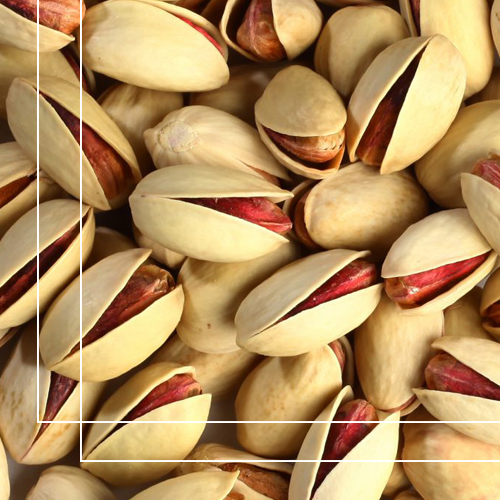Ahmad aghaei pistachio is bigger and thicker than Fandoghi Pistachio and has a great taste. This type of pistachio is the most common.